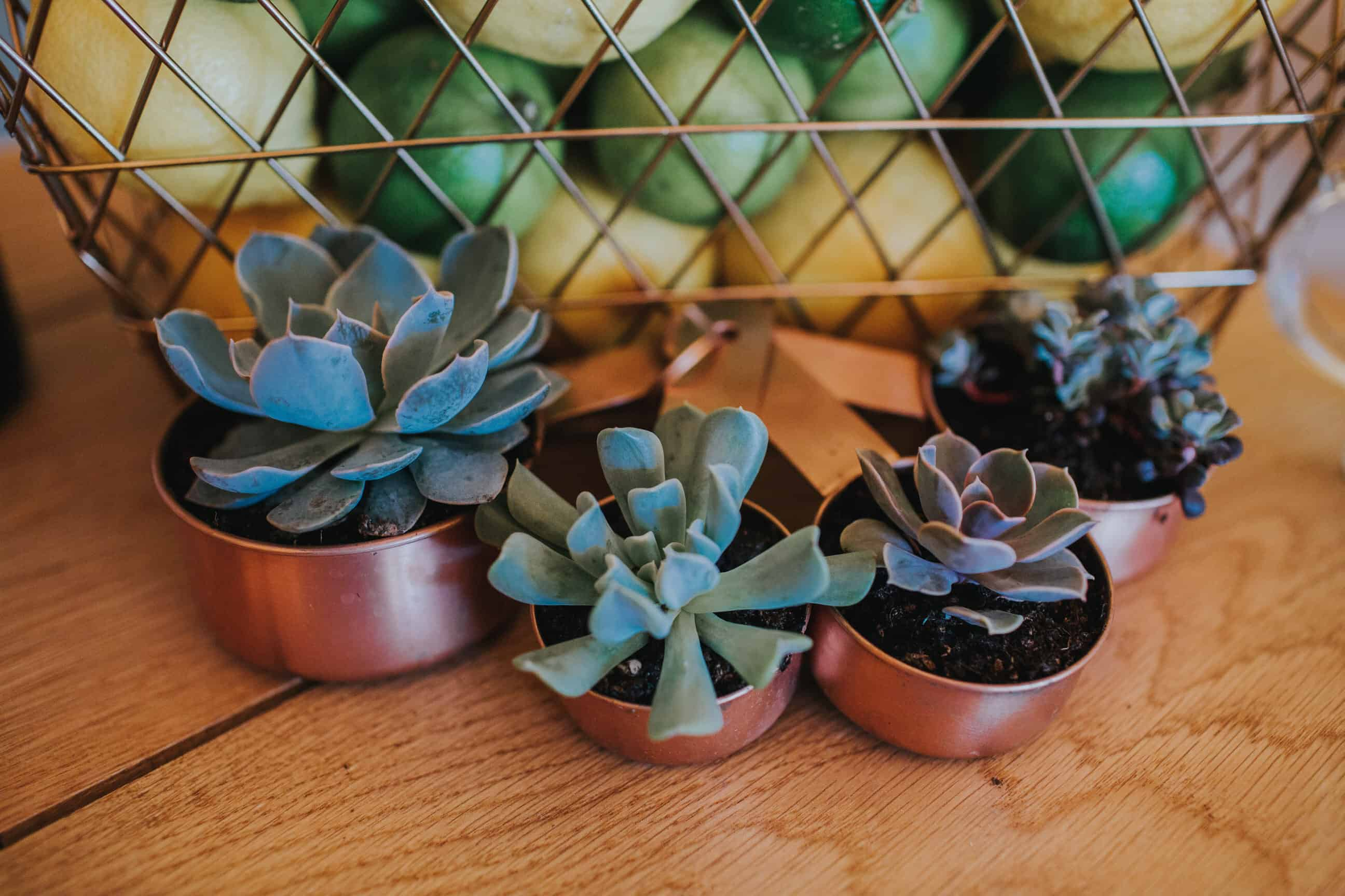 Copper Pots & suculents Emily Wisher Artisan florist -by Sami Tipi captured by Ed Brown Photography