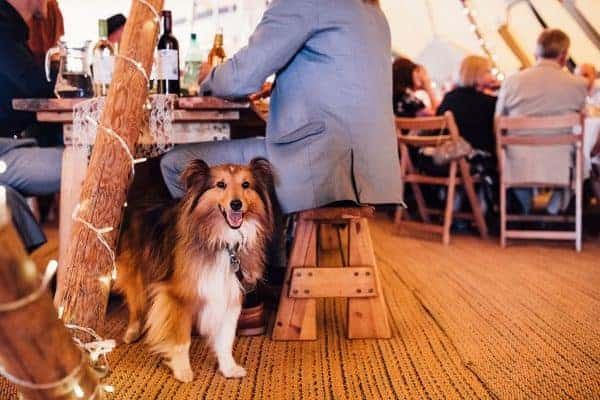 Dog Wedding Guests