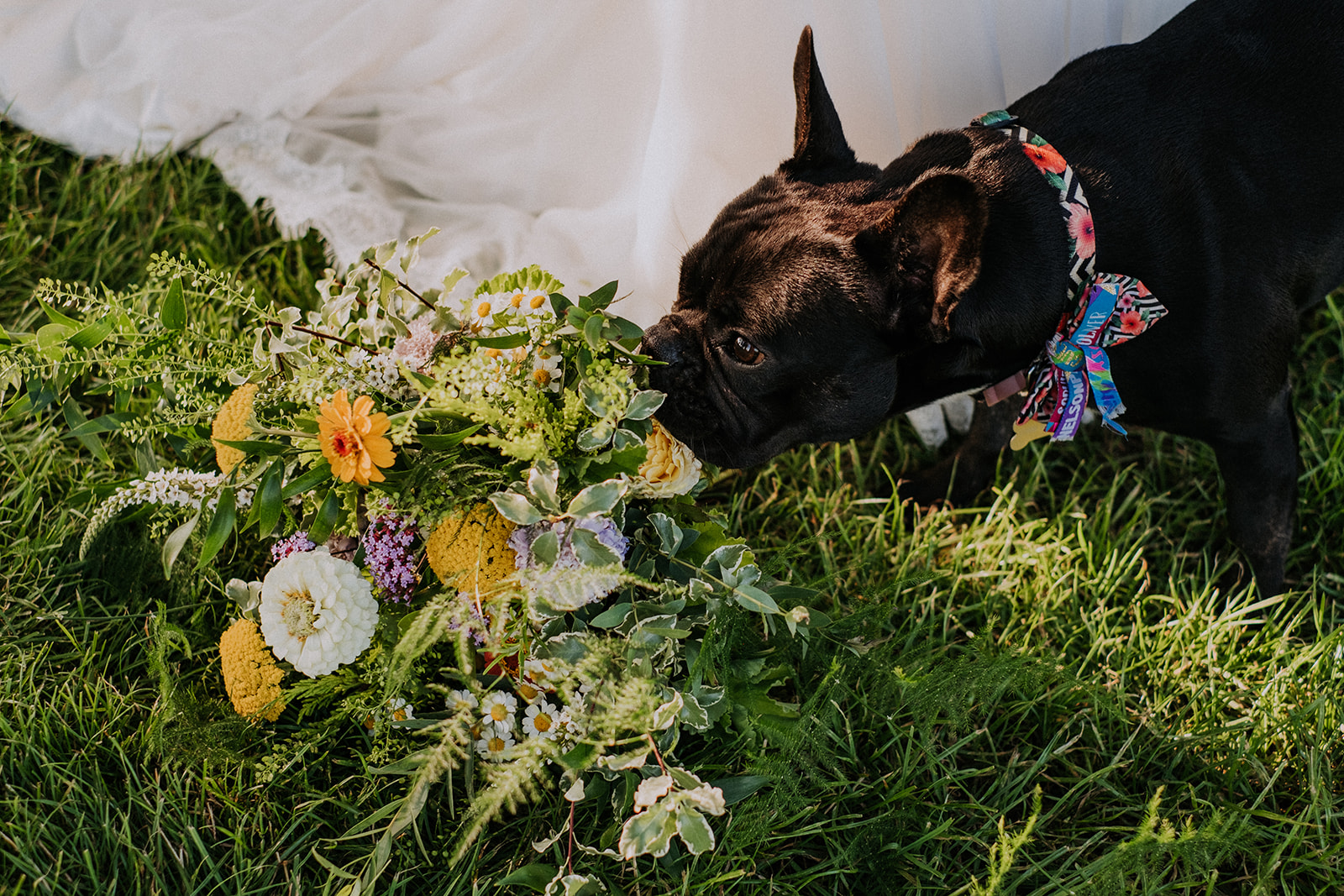 family dog at cattows farm wedding with sami tipi